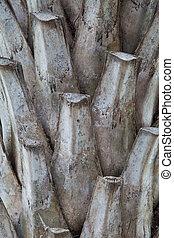 Photo of Palm tree bark background