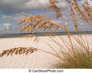 SEA OATS ON THE BAY