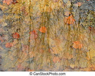 Impressionism in a puddle