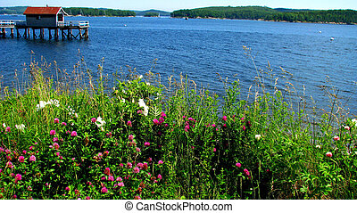 Red Clover over the Harbor