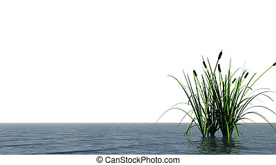 water and reed - isolated water landscape and reed - 3d...
