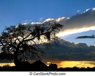 Mesquite Sky
