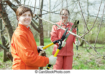 women pruning tree in orchard - Two women pruning fruits...