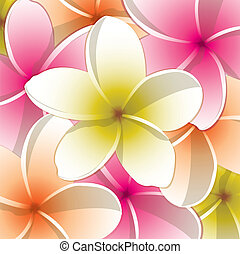 Frangipani - All occasion frangipani card in vector format