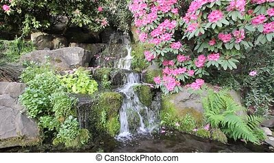 Waterfall in Crystal Springs Garden - Waterfall with Ferns,...