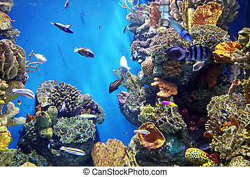 Reef - Aquarium with submarine life