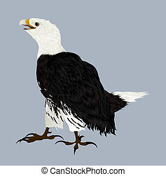 American eagle - Illustration of an american eagle
