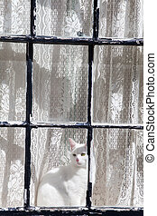 white cat in a window