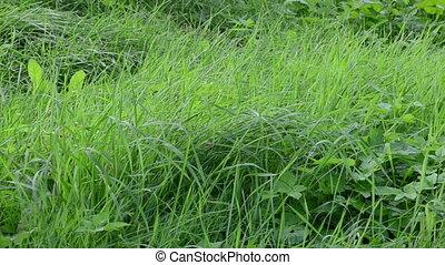 leg rubber boot grass - gardener in waterproof rubber boots...