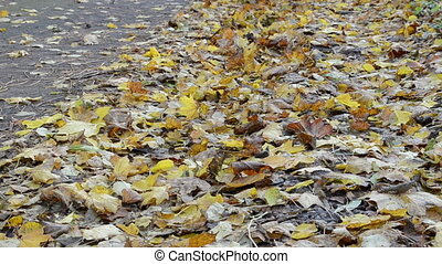 woman walk autumn leaves