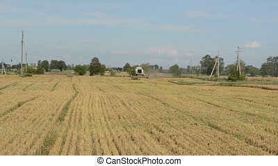 harvest wheat field