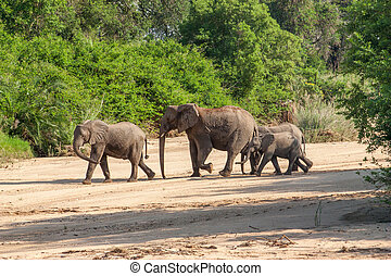 Wild herd of elephants come to drink in Africa in national...