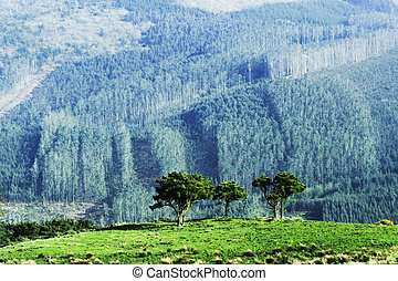 trees on the hil - group of trees on the hill and forest in...