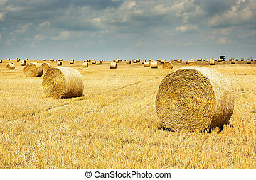 Harvest time. Hay bales on the field.