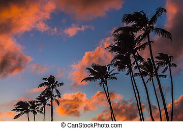 Sunset Palm Trees 1 - Colorful clouds at sunrise over a...