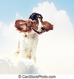 Dog-aviator wearing a helmet pilot. Collage - A dog wearing...