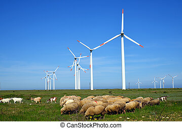 Sheep and rams in the field against wind turbines