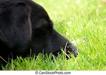Nahaufnahme Hundekopf - Nahaufnahme von Hundekopf im Gras