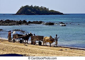 people palm dustman branch - hand cart people palm dustman...