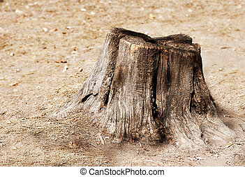 Tree stump - Old tree stump