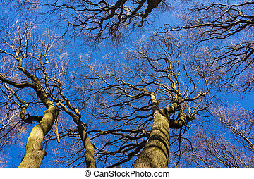 Tree tops in the forest.