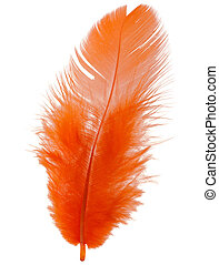 Orange feather isolated on white background cutout