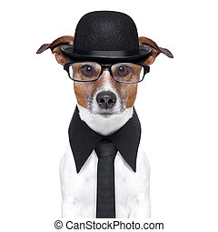british dog with black bowler hat and black suit
