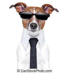 cool doggy - cool dog with black glasses  and a tie
