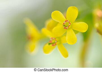 beautiful yellow flower in nature. macro