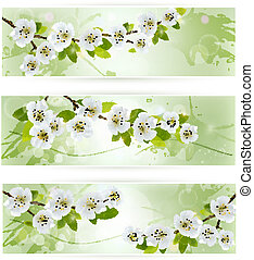 Three nature banners with blossoming tree branches. Vector...
