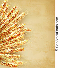 Ears of wheat on old paper background Vector illustration