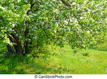 Beautiful spring tree with fresh green leaves and white flowers