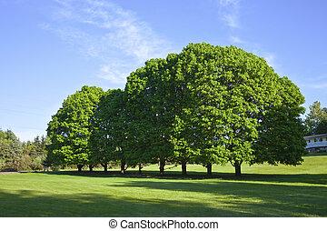 Trees in a field Oregon. - Trees in full bloom in a field...