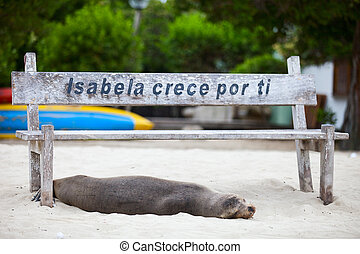 Sea lion at beach - Sea lion relaxing on a beach at...