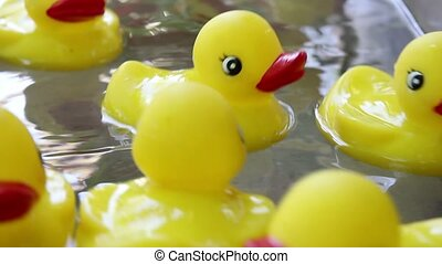 Rubber Duckies Floating in Water