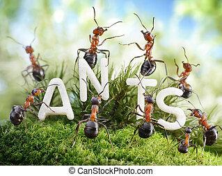 nosotros, ser, el, hormigas, hormiga