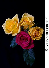 Red and yellow roses bunch on black background soft light