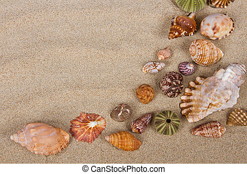 Sea shells in studio many sand pattern variety
