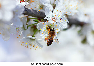 Blooming Flowers Branch with bee, close up.