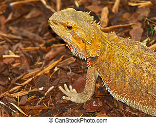 Lizard - Photo of the beautiful sand colored lizard