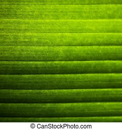 Banana leaves - abstract background of banana leaves pattern