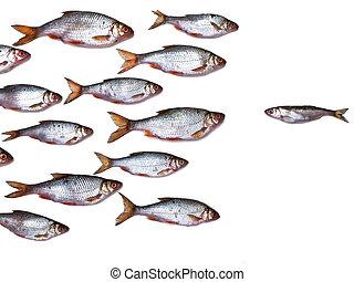 fish, groupe, tout, itself