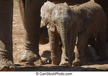 Elephant Calf at the Waterhole Eastern Cape