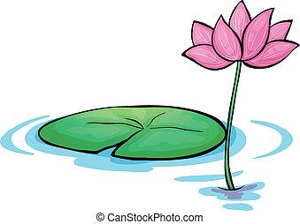 a, nénuphar, fleur