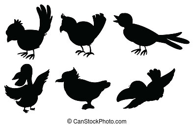 Bird silhouettes - Illustration of the bird silhouettes on a...