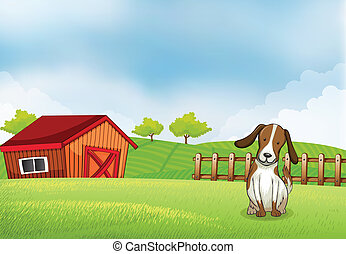 A puppy in the farm