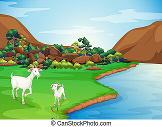 Two goats at the riverbank - Illustration of the two goats...
