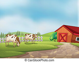 Two cows at the farm with a barn and fence