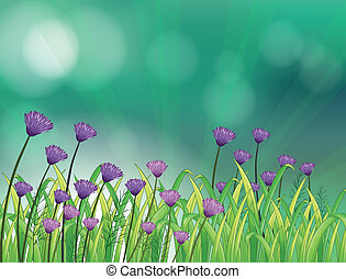 A garden with violet flowers