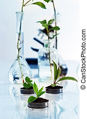 Experimenting with flora in laboratory. - Seedlings in lab